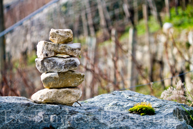 Contempating the lifecycle of grapes. Zen rock stack on a stone wall