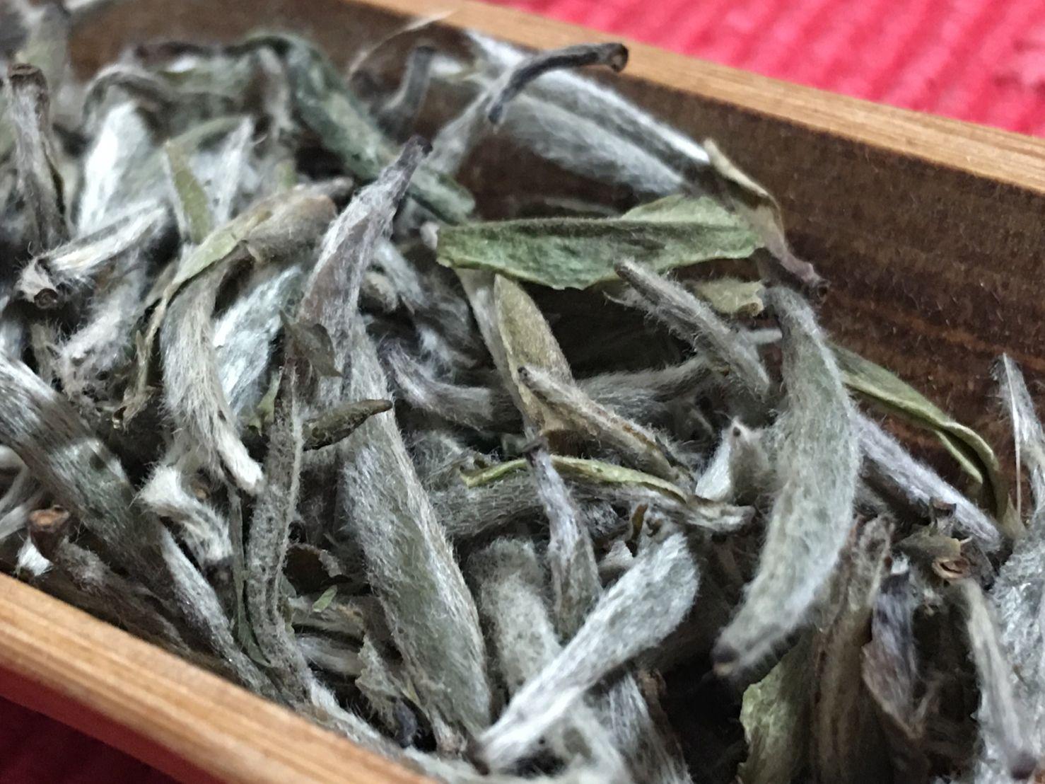 Gāoshān Báiháo Yínzhēn Chá, 高山白毫银针, High Mountain Silver Needle White Tea